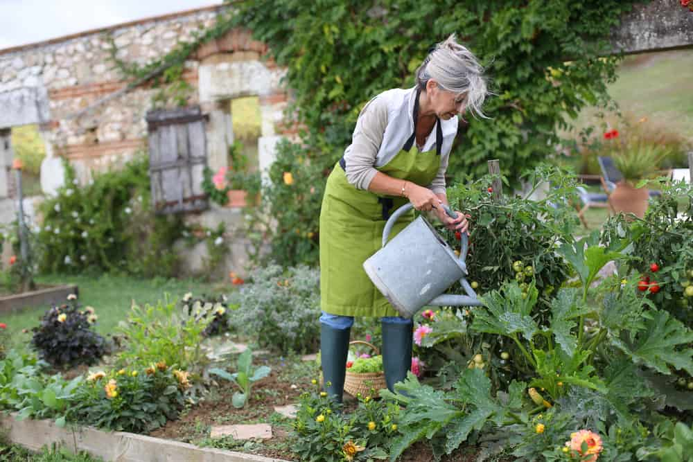 old woman gardening green apron watering can