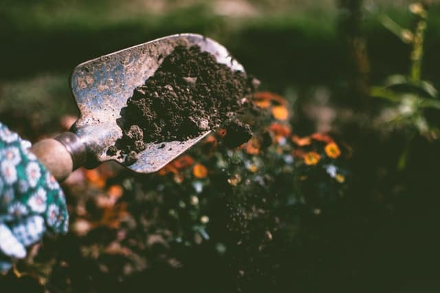 garden shovel trowel with dirt planting flowers