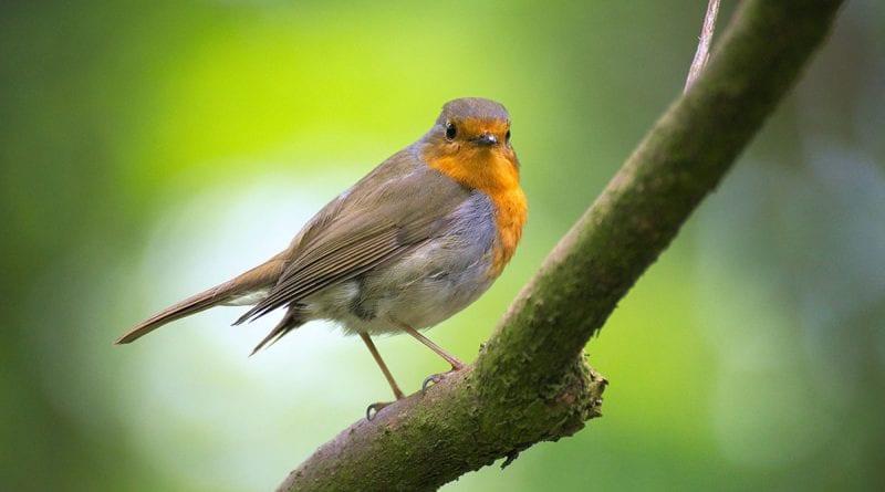 (credit pixabay) bird on tree branch