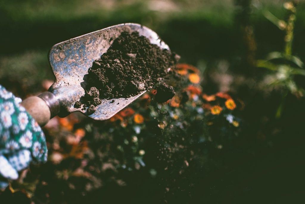 (credit lisa fotios) gardening