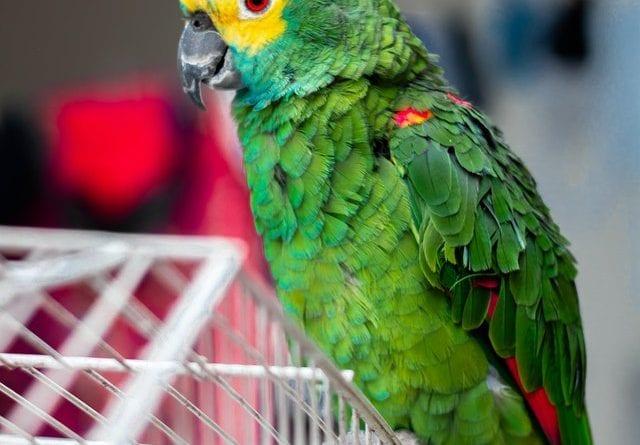 (credit andre lisatchok) pet bird